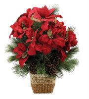 Natural Poinsettia