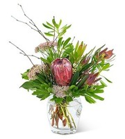 Posh Protea, Everyday, Birthday, Anniversary