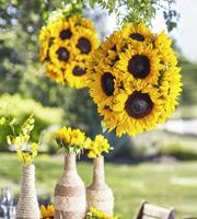 The FTD® Sublime Garden™ Hanging Arrangement