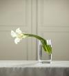 The FTD® White Calla Bouquet