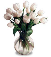 Tulip Bouquet White