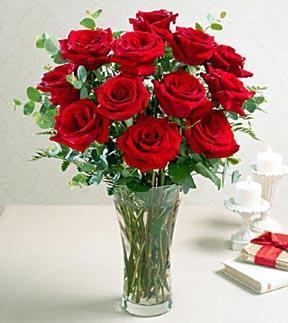 1 Dozen Roses