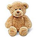 plain_bear